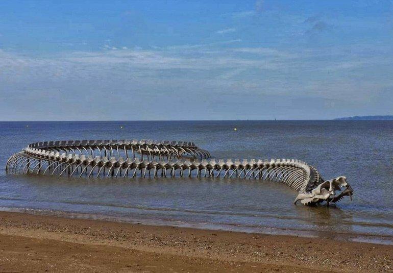 Загадки морских чудовищ