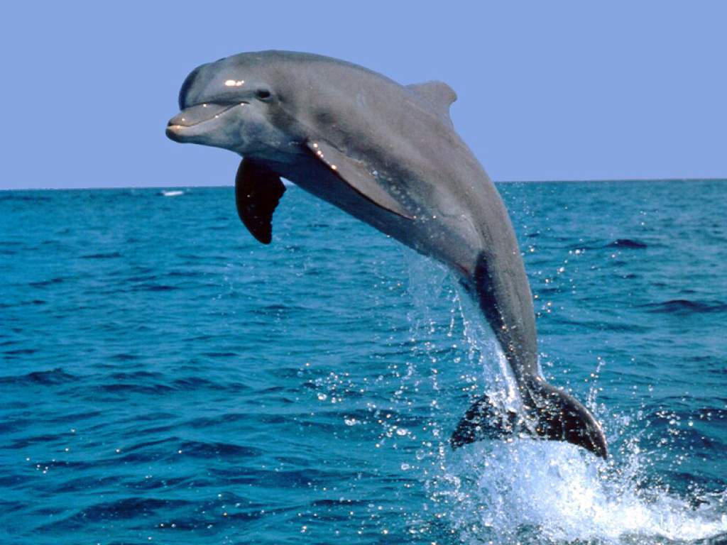 Зверская война: дельфины на службе