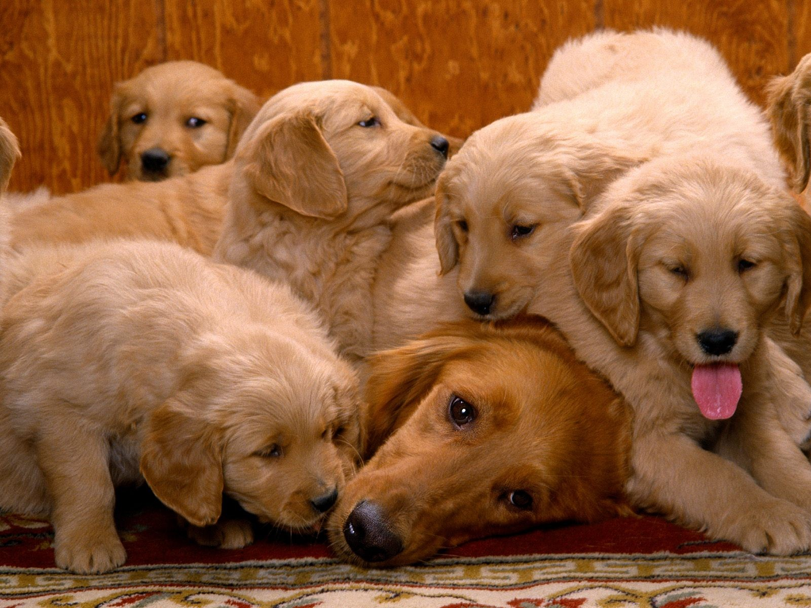 Гороскоп для собак: Как зависит характер питомца от знака зодиака?
