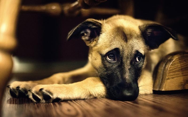 6 признаков того, что собака стареет и ей нужен особый уход