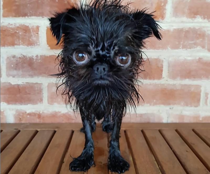 Не родись красивой: 6 страшненьких собак, которые стали звездами Инстаграма