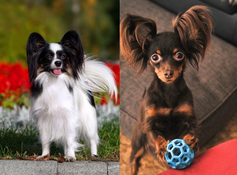 20 пород собак, которых постоянно путают друг с другом
