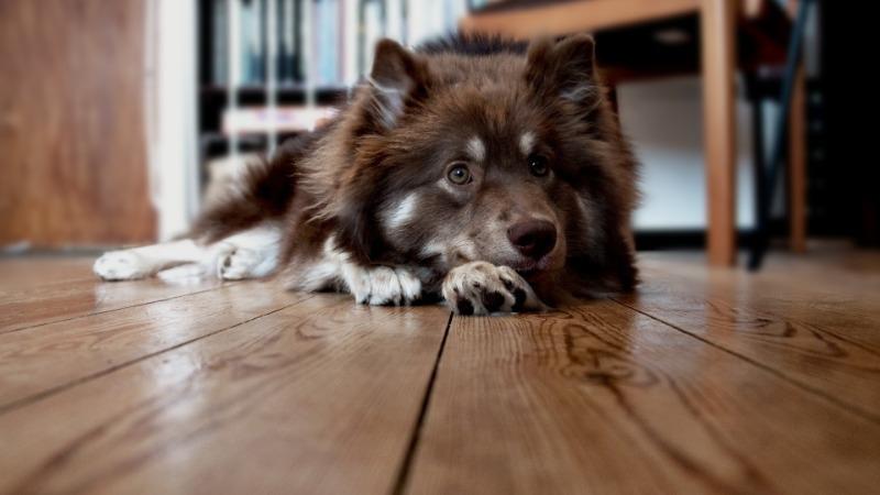 Как наш пес Тимка спас меня и моего будущего малыша