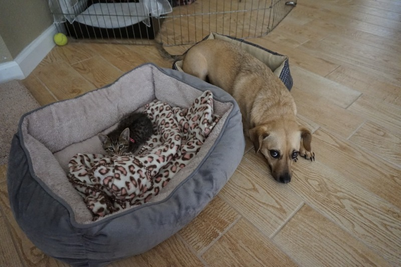 Умилительная реакция собак, которые обнаружили, что их место заняла кошка