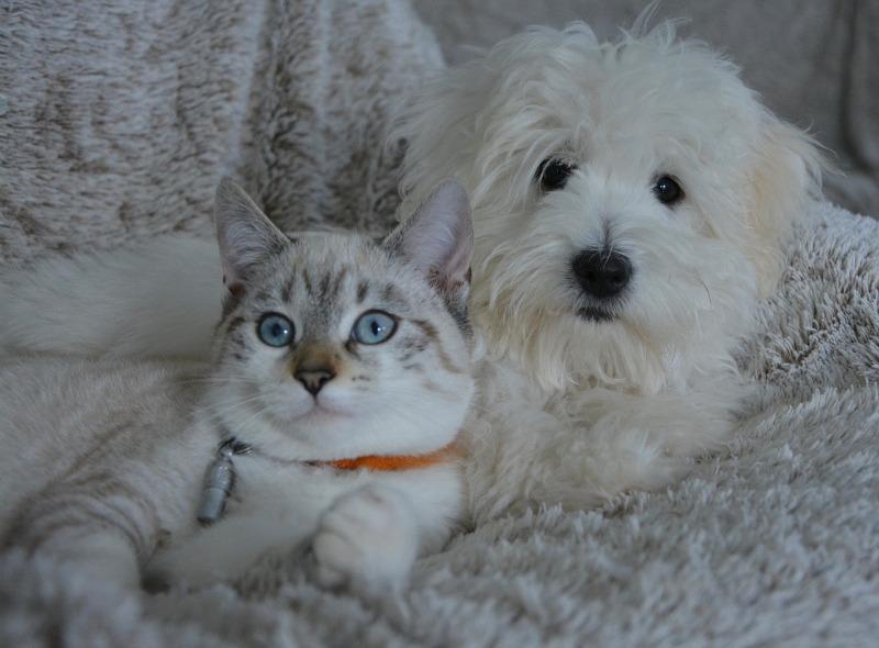 Как кот и пес меня из-за котлет обвели вокруг пальца