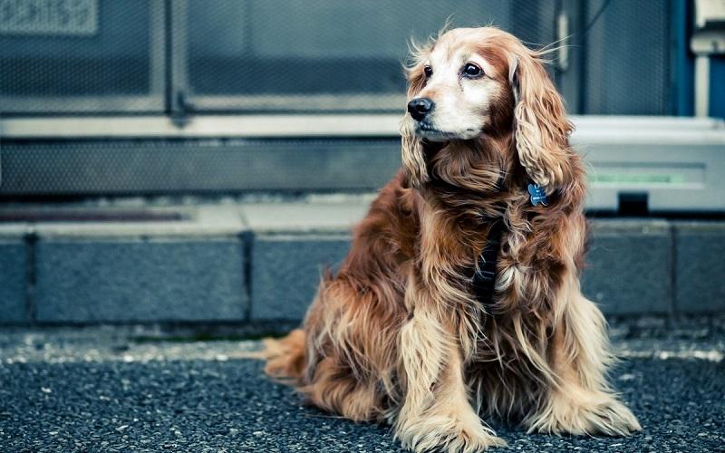 """""""На 10-й, пожалуйста"""": как модный собачий гаджет отрезвил моего соседа"""