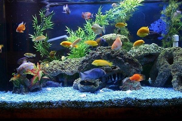 Выбираем хороший аквариум